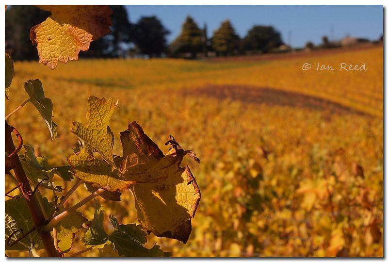 Autumn colours | Flickr - Photo Sharing!