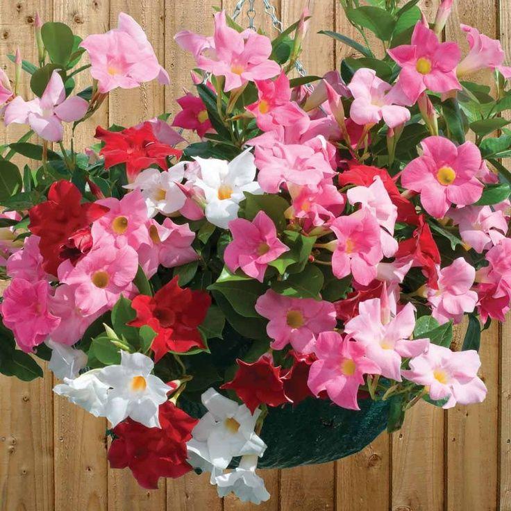 Rozeta Handmade Jakie Kwiaty Posadzic W Maju By Kwitly Do Poznej Jesieni Czyli Kwiaty Na Balkon I Taras N Biennial Plants Beautiful Flowers Hanging Garden