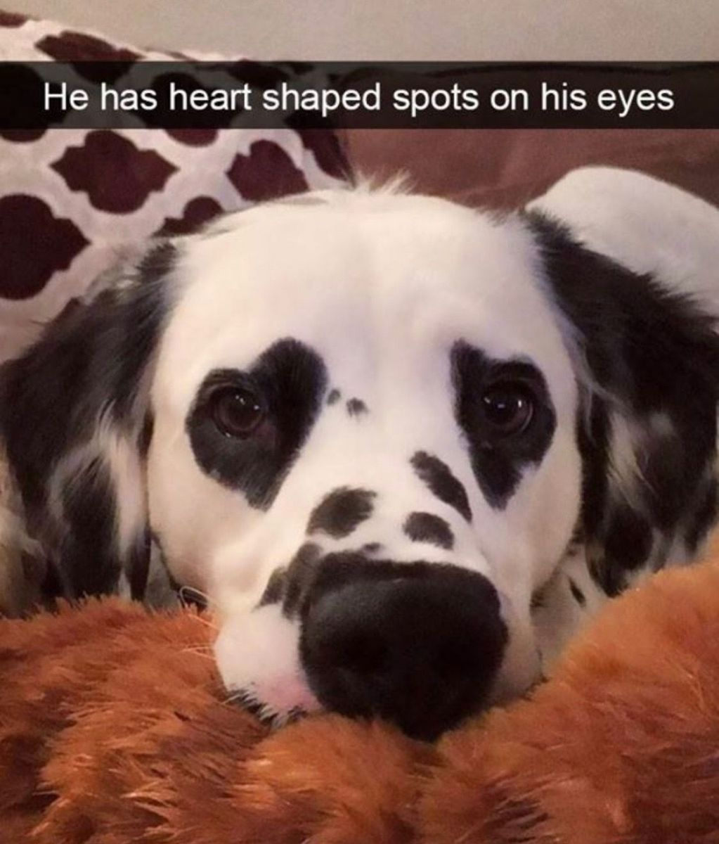 Photo of He has heart shaped spots on his eyes