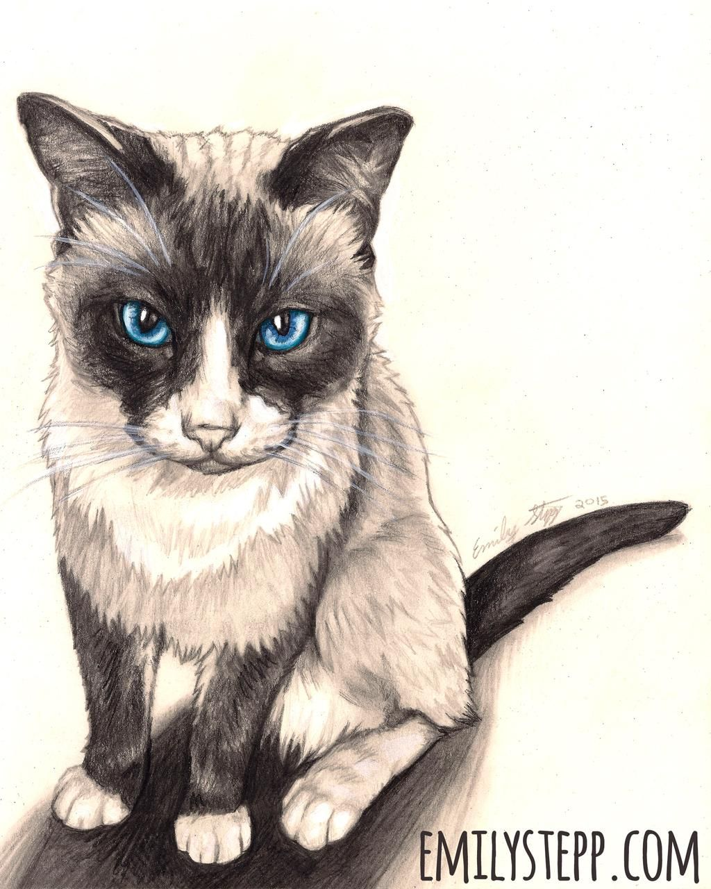 Snowshoe Cat Pet Portrait Bandit By Emilystepp On Deviantart Snowshoe Cat In 2020 Snowshoe Cat Pets Cats Pet Portraits