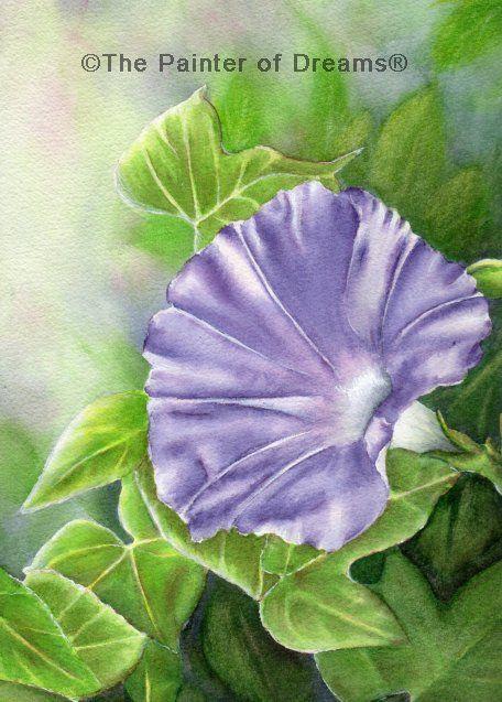 Summer morning glory watercolor painting by Arkansas artist Sheri Hart