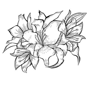 Lily Flower Black And White Drawing Black and white lily drawing
