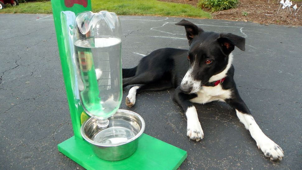 Make An Automatic Water Dispenser For Pets Out Of A Two Liter