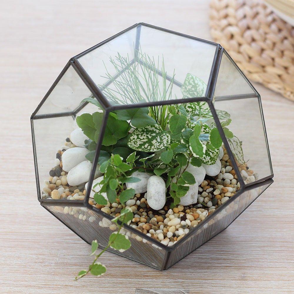 Decorative Pebbles For Terrariums Indoor Planters Harvest Micro