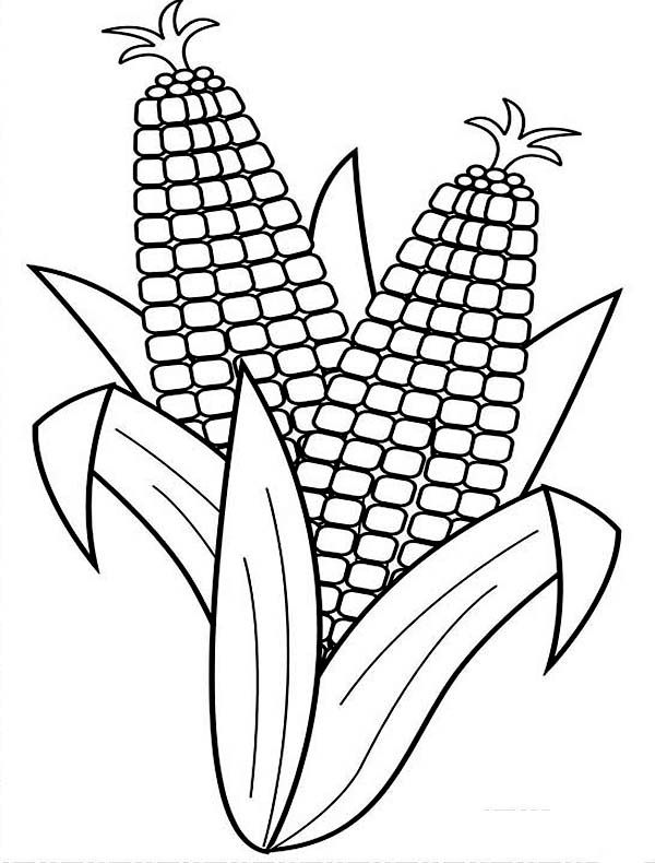 Corn Harvesting Corn Coloring Page Vegetable Coloring Pages Corn Drawing Coloring Pages