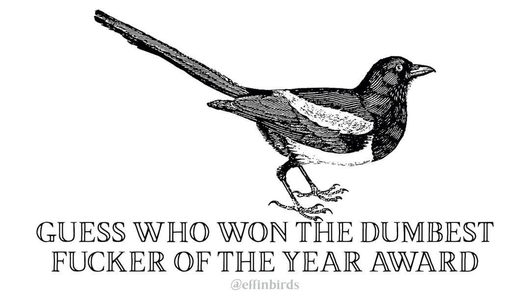 Effin Birds S Instagram Profile Post Bird Quotes Friend Anime Funny Memes