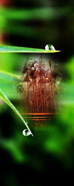 'Natur Abstrakt  21 Wasserlilie-Regentropfen' von Walter Zettl bei artflakes.com als Poster oder Kunstdruck $16.63