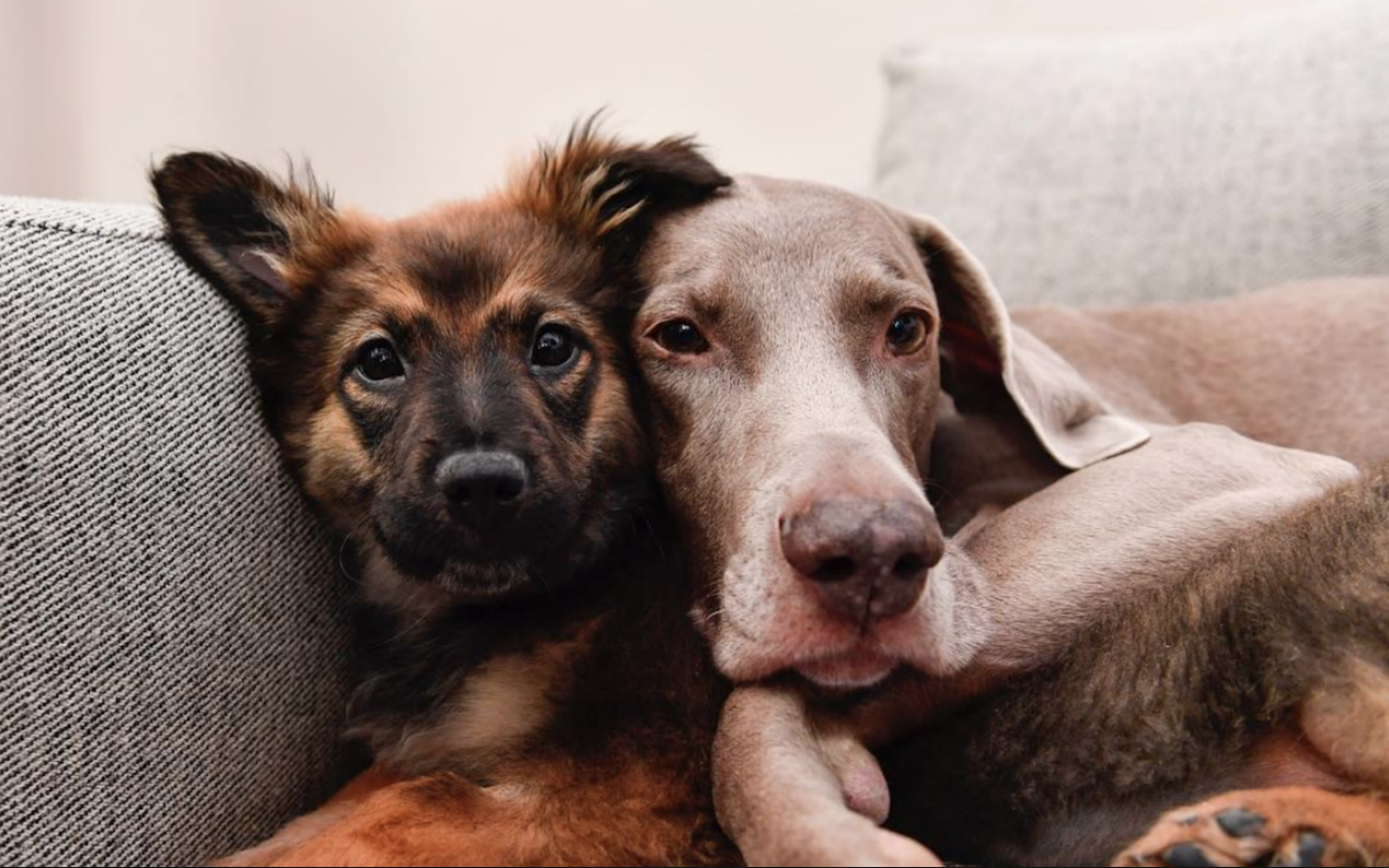 Instagram Famous Dog Family Is Fostering Shelter Pups And Their Account Is The Most Beautiful Thing You Will Ever See Famous Dogs Foster Dog Dogs