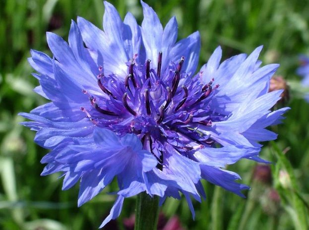 Daftar Nama Bunga Gambar Bunga Cantik Indah Unik Dan Langka Lengkap Dengan Penjelasannya Kumpulan Macam Macam Bunga Gambar Bunga Bunga Bunga Indah Bunga