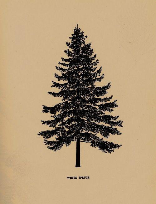Christmas Tree Tattoo Ideas.20 Fir Tree Tattoo Ideas How Do It Info