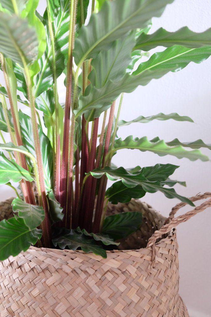 Junglefeber Eller Lidt Om At Laura Ogsa Er Vild Med Disse Willowlounge Dk Planter Gronne Planter Planteideer