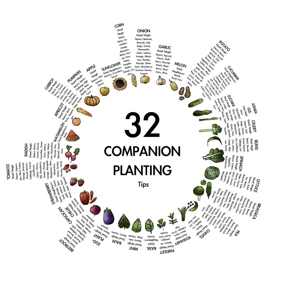 17 Best images about Potager – Sample Companion Planting Chart