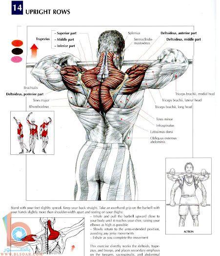 بالصور تقوية العضلات الظهرية