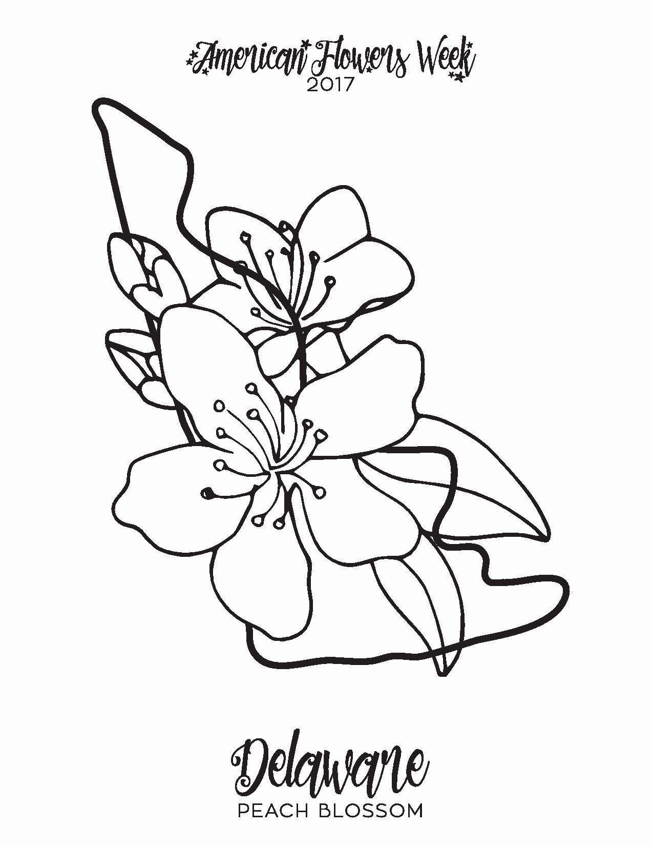 Hawaii State Flower Coloring Page Beautiful 50 State Flowers