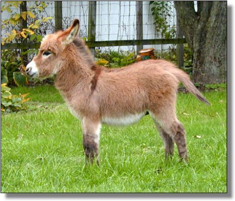 What are the possible results from horses and donkeys mating?