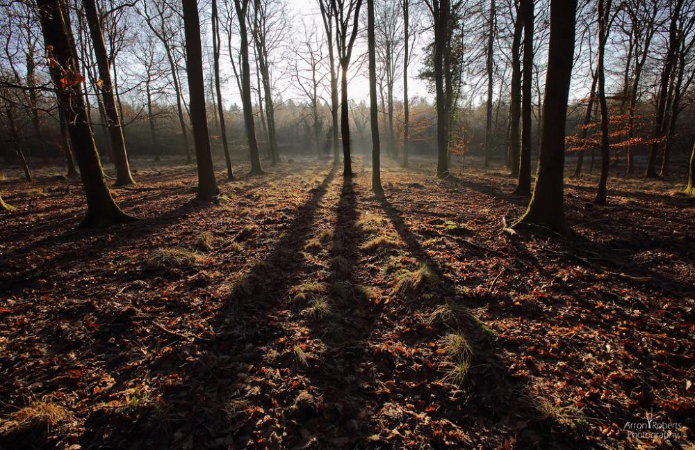 Misty Sunrise In 2020 Landscape Trees Landscape Misty