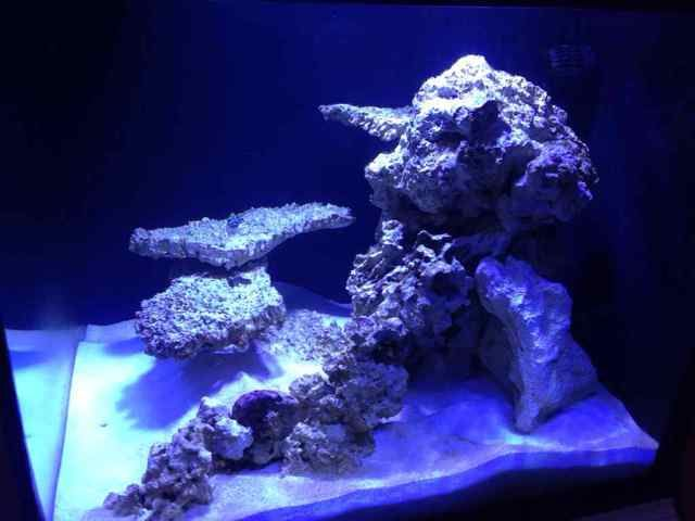 93 Gallon Cube Tank 93 Gal Cube Rock Scape Ideas Reef2reef Saltwater And Reef Tank Aquascaping Saltwater Fish Tanks Saltwater Aquarium Fish