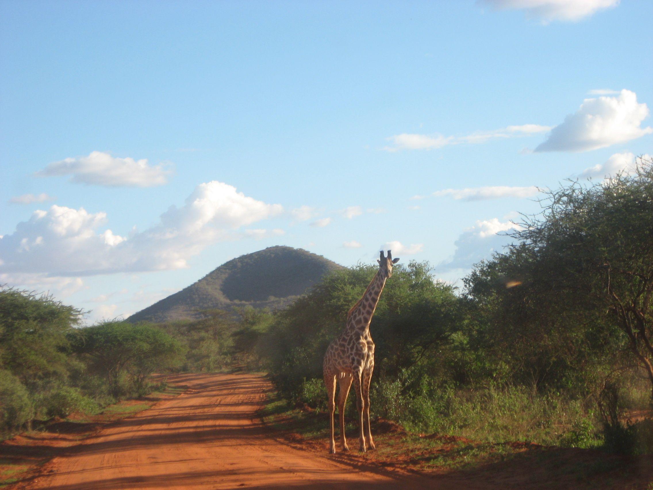 East Tsavo National Park, Kenya