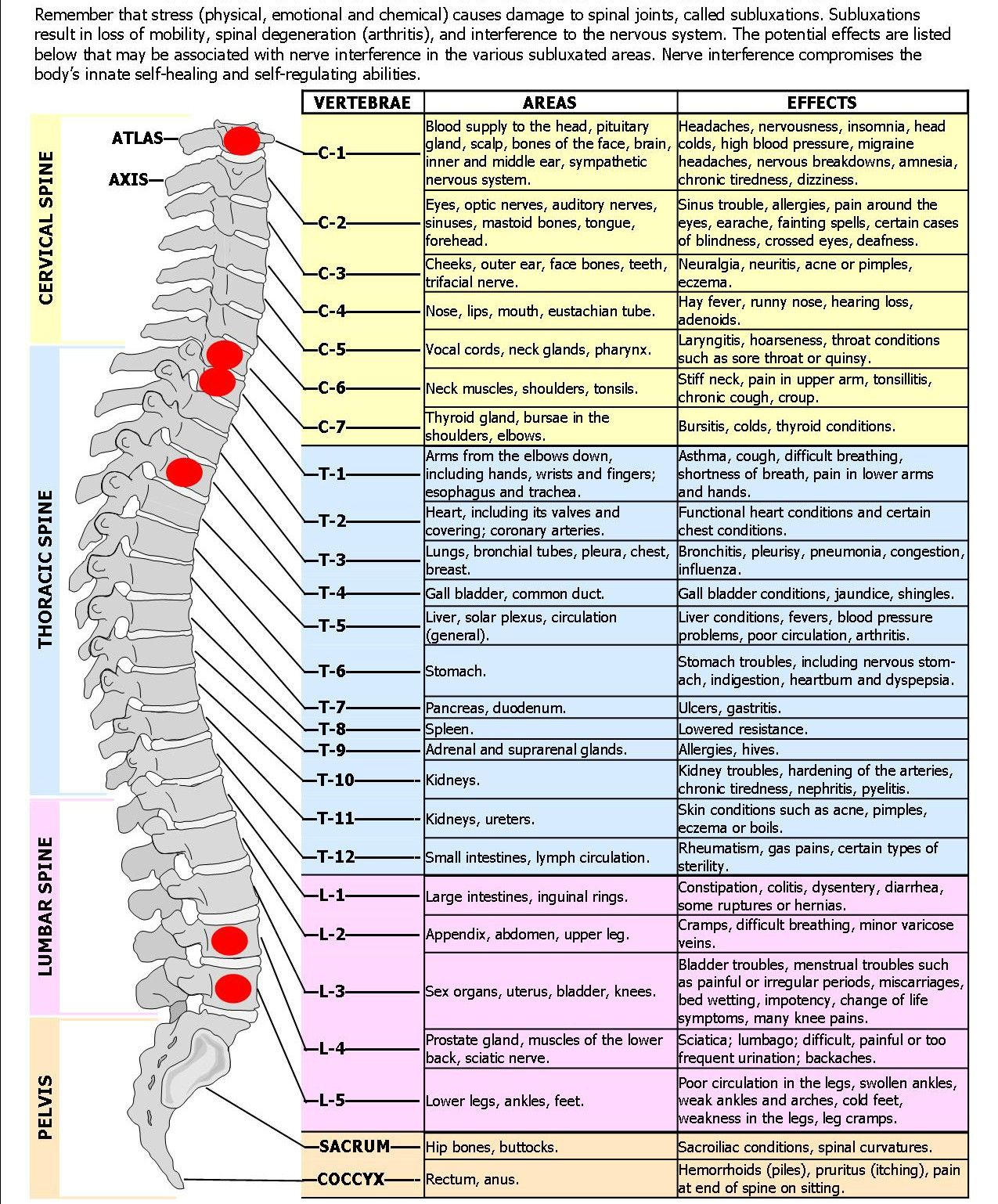 medium resolution of spine diagram spinal nerves effects chart