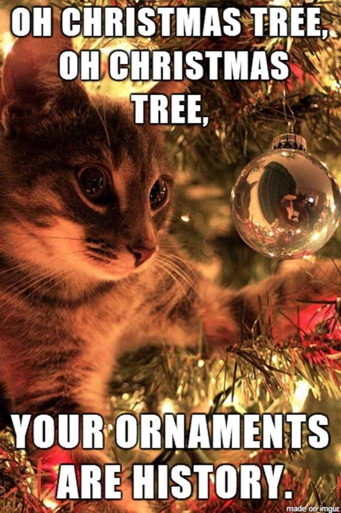 Best 50 Funny Christmas Memes Funny christmas memes