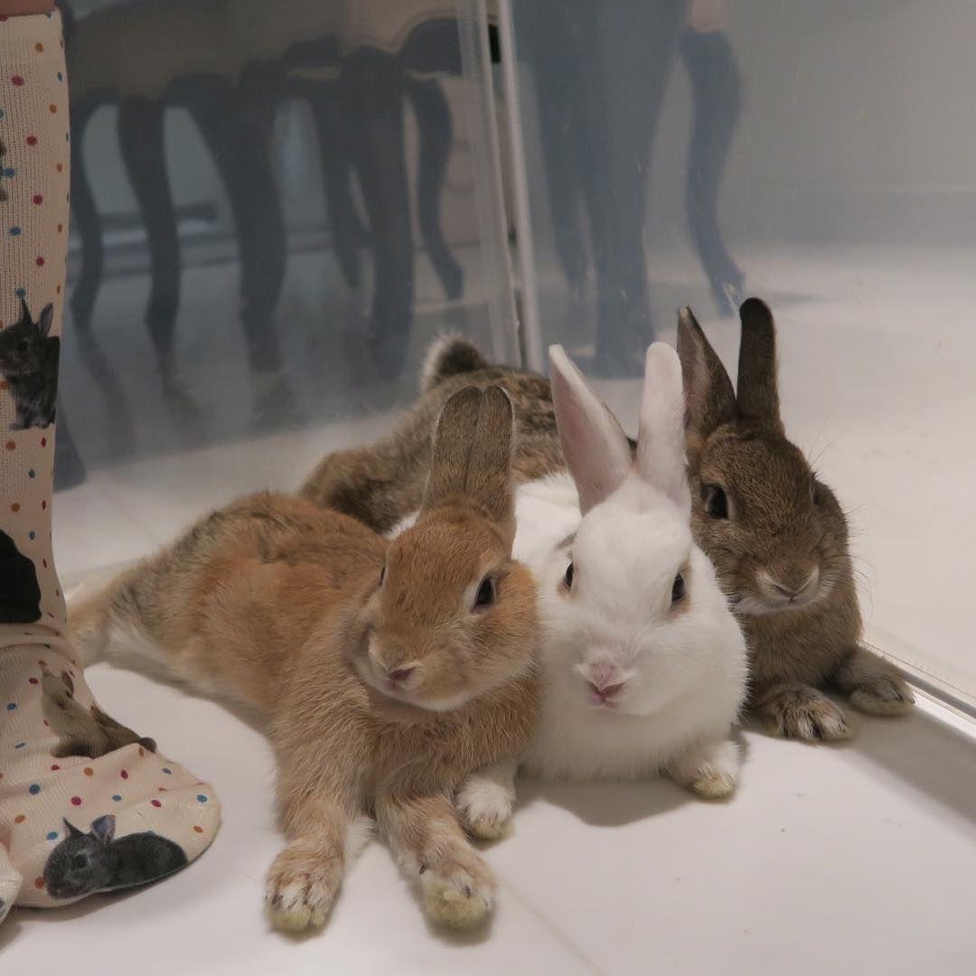 Anyone Missed Cottonbae Bun Cream Bunny Mom Cute Animals