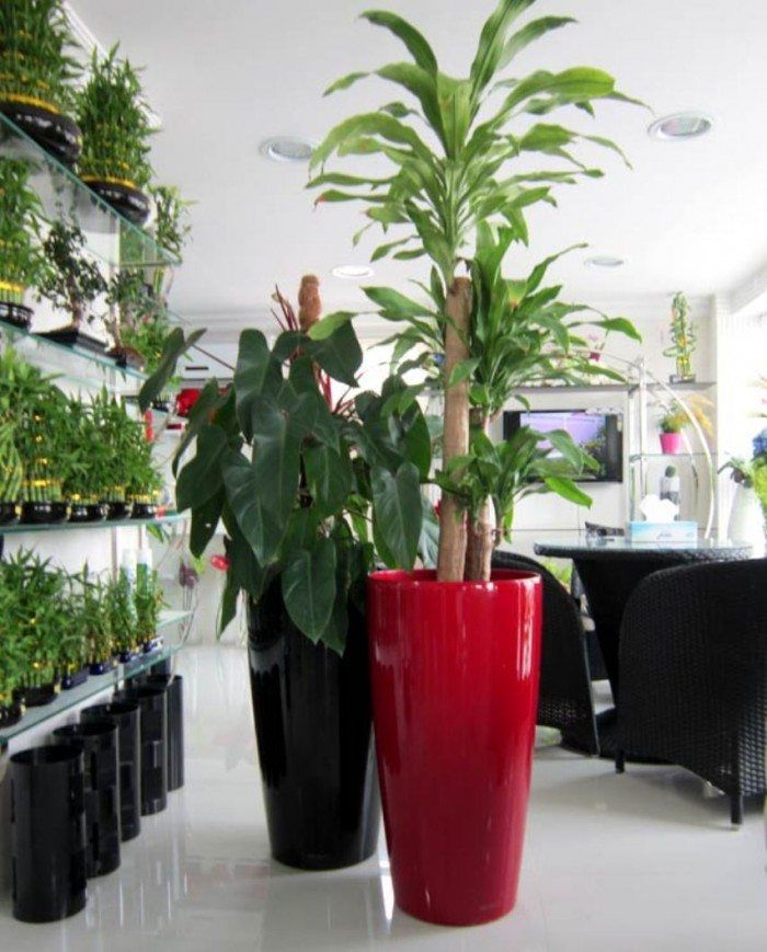 Good Pots For Your Indoor Plants