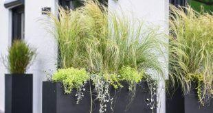 Pflanzgefäß als Privatsphäre auf der Terrasse