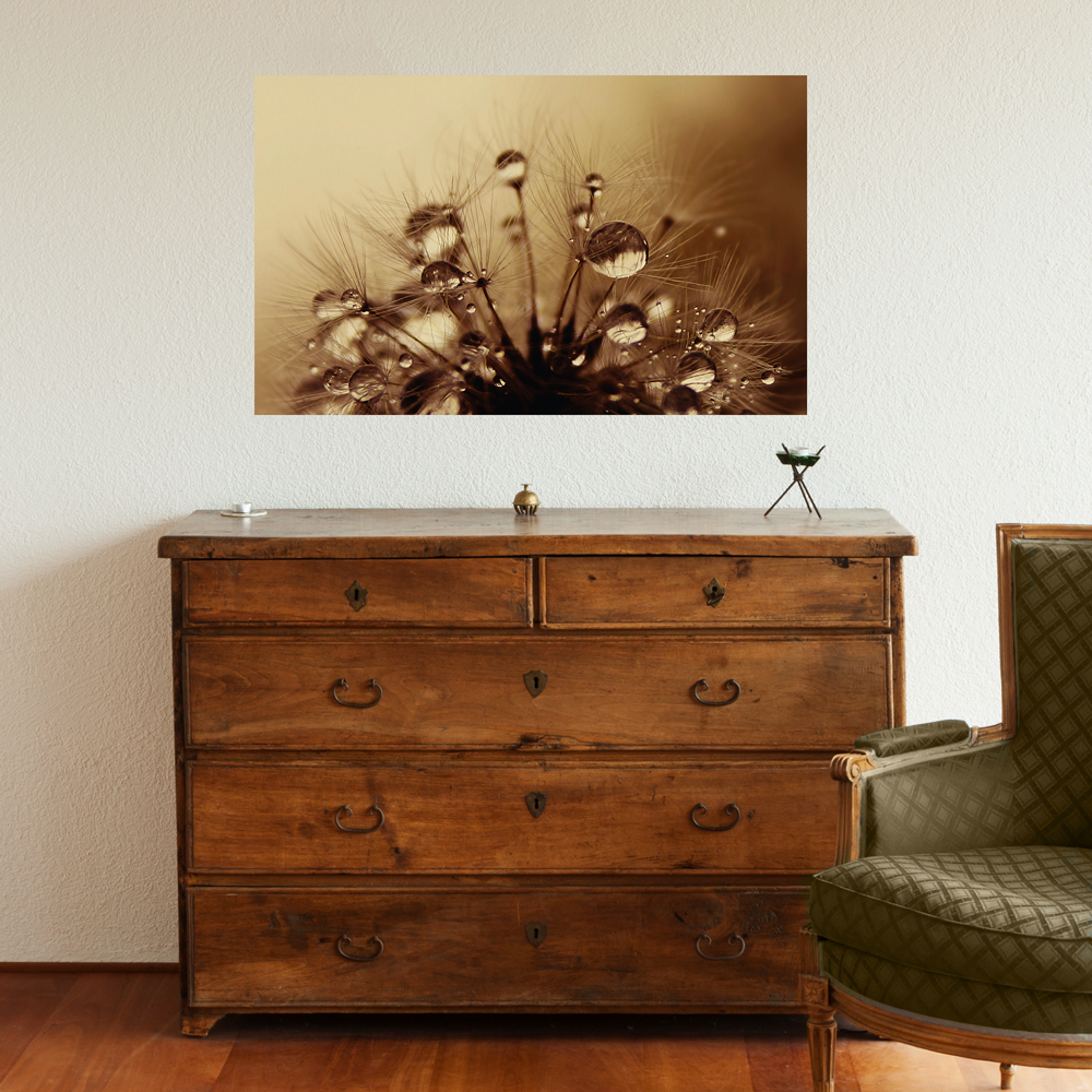 Dandelion Photography Decal - Toffee Drops by Ingrid Beddoes