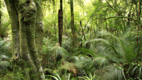 'Natuurbescherming voorkomt ontbossing Amazonegebied niet'