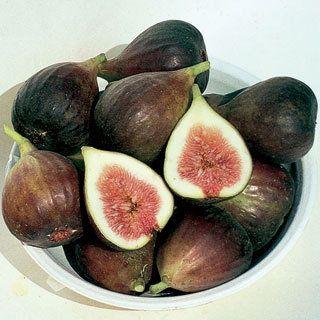 I Need A Fig Tree Fig Tree Plant Fig Tree Fig Plant