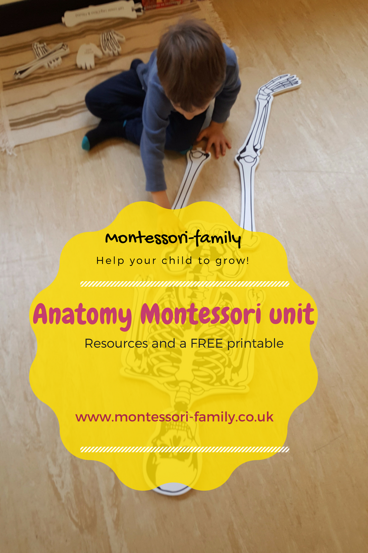 Montessori Anatomy And My Body Ideas And Activities
