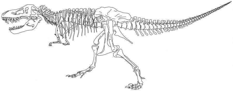 kleurplaten dino skeletten