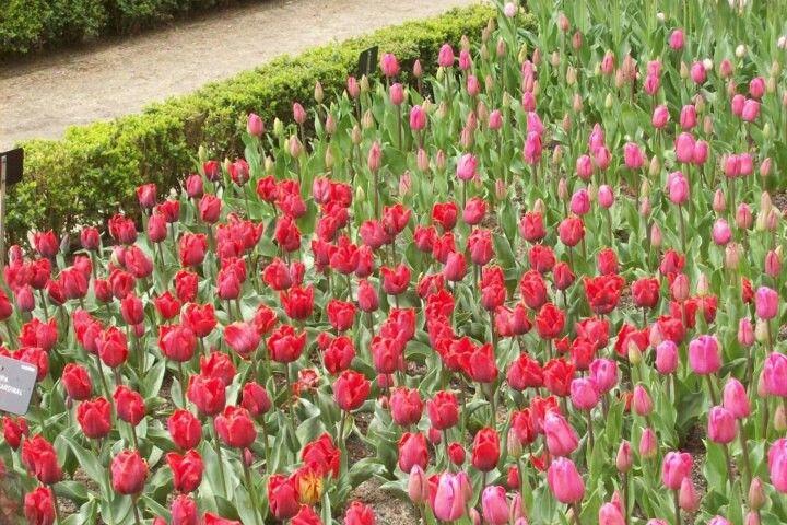 Jardín botánico- Madrid.