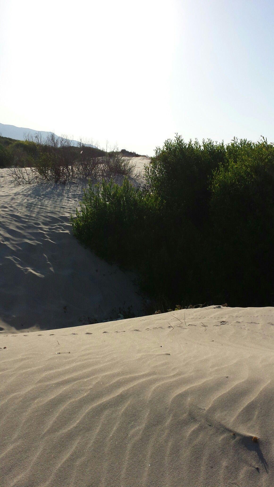 Tunisie  Borj Cedria  La pinède