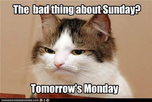 Tomorrow S Monday Funny Cats And Dogs Grumpy Cat Cats