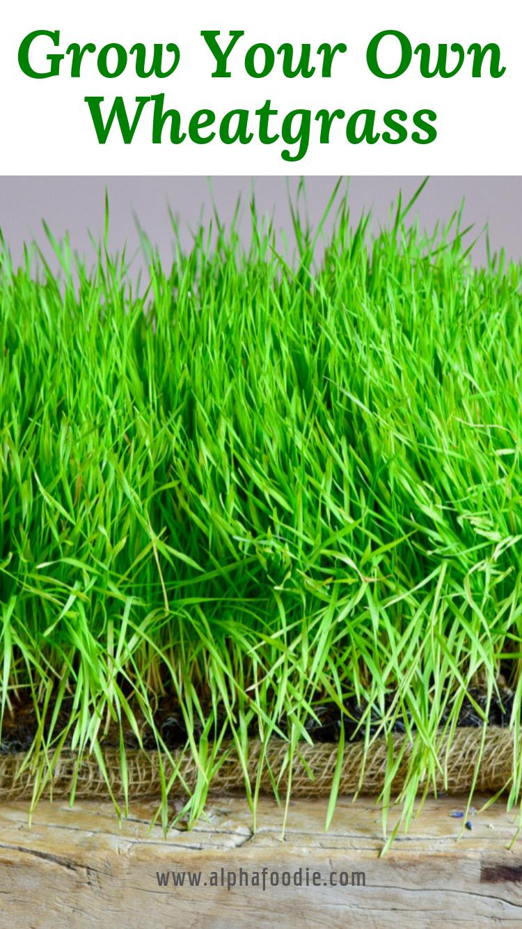 Photo of Grow your own wheatgrass