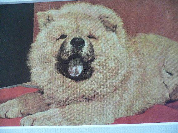 Chow Chow Dog Vintage Mounted 1958 Original Dog Plate Print Unique