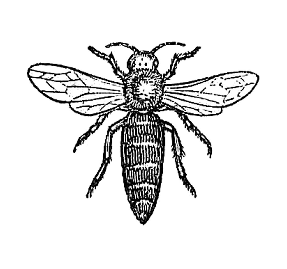 Insect Clip Art Black And White Home Dayasriolep