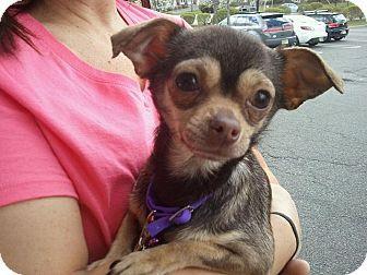 Pin By Cindy Feiler Jampel On Matching Love Chihuahua Mix Pet