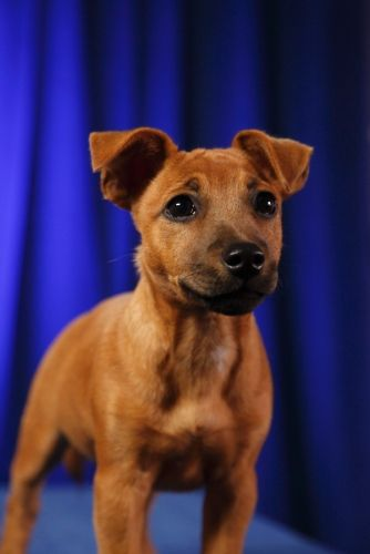 Puppy Bowl 2017 The Super Goes To Dogs