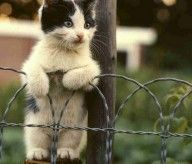 beauty, nature, sayings, beautiful photography, cats, Katzen, baloons, animals, lol, cutes, cat, 1, cute, kitty on fence - claudia