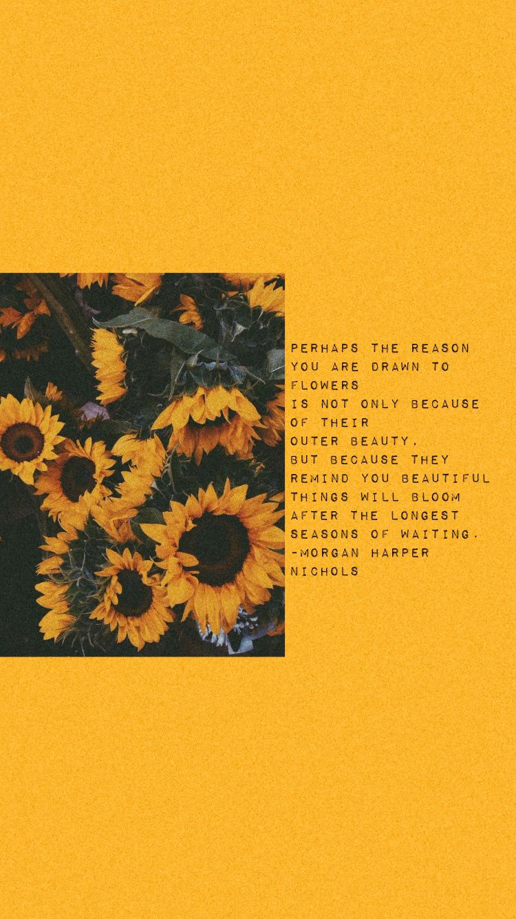 First Try Yellow Quotes Wallpaper Quotes Sunflower Quotes