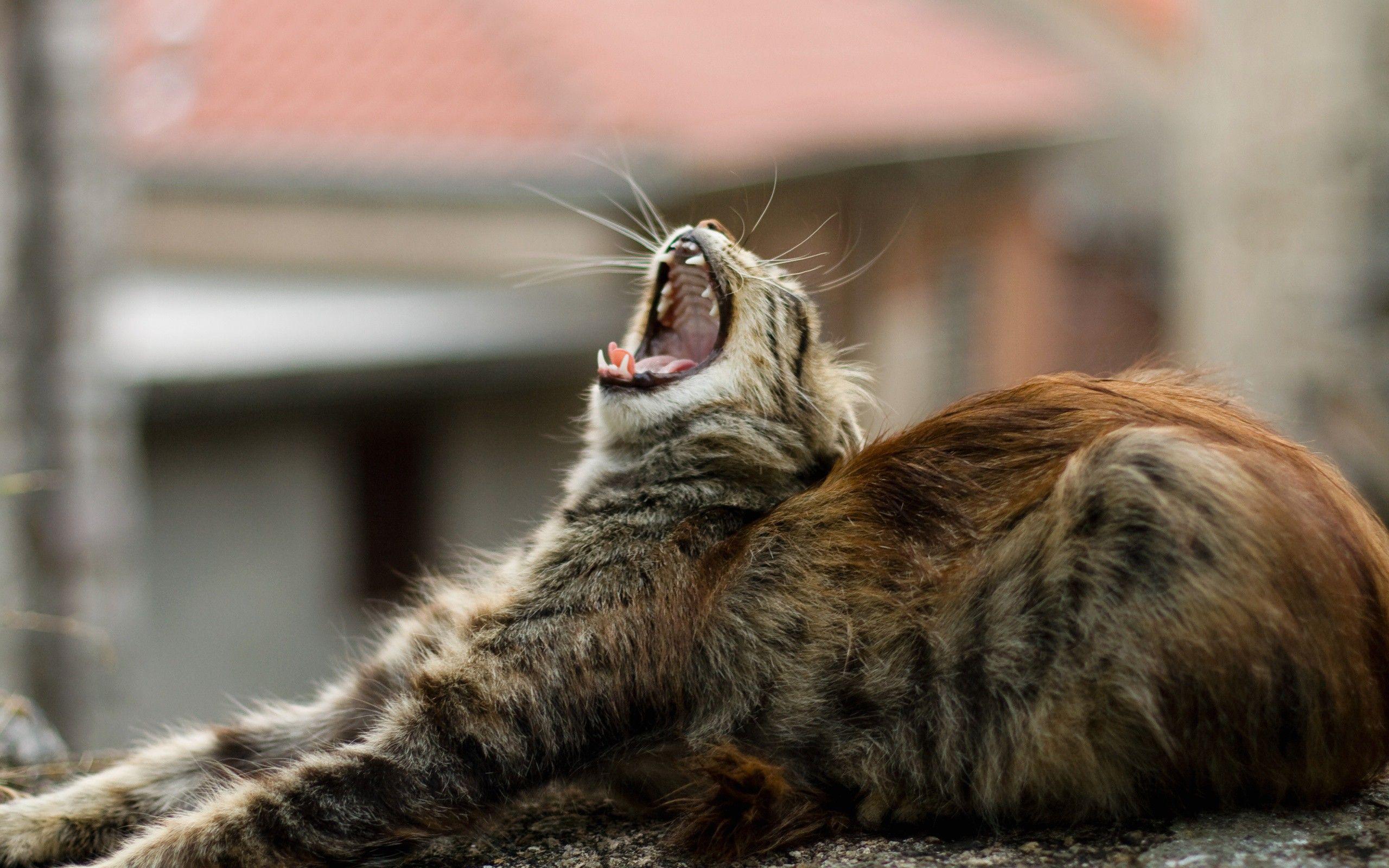 Find out: Sleepy Cat wallpaper on  http://hdpicorner.com/sleepy-cat/