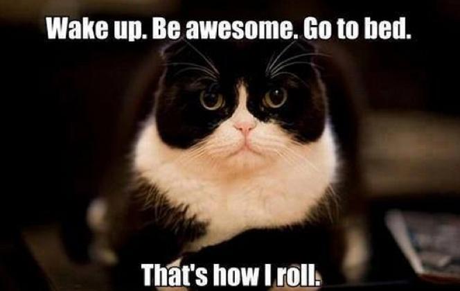 Funny Cat Meme Pictures : Funny cat memes cute cat pictures photos pics