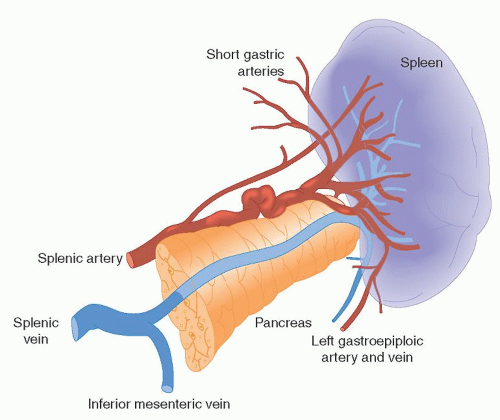Image result for splenic artery | usmle | Pinterest