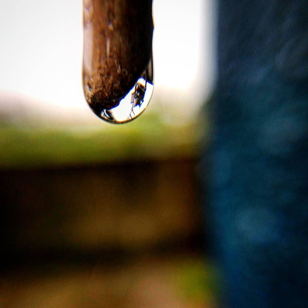 #macrophotography #mobile #camera #photography #drops #Rain #monsoon
