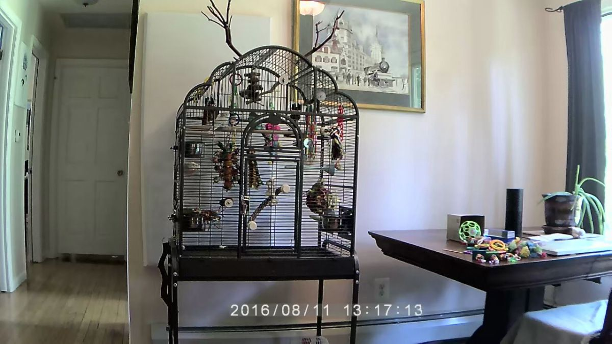 10 Tips For Optimal Bird Cage Placement Homekeethome Parakeet Cage Bird Cage Design Budgie Cage