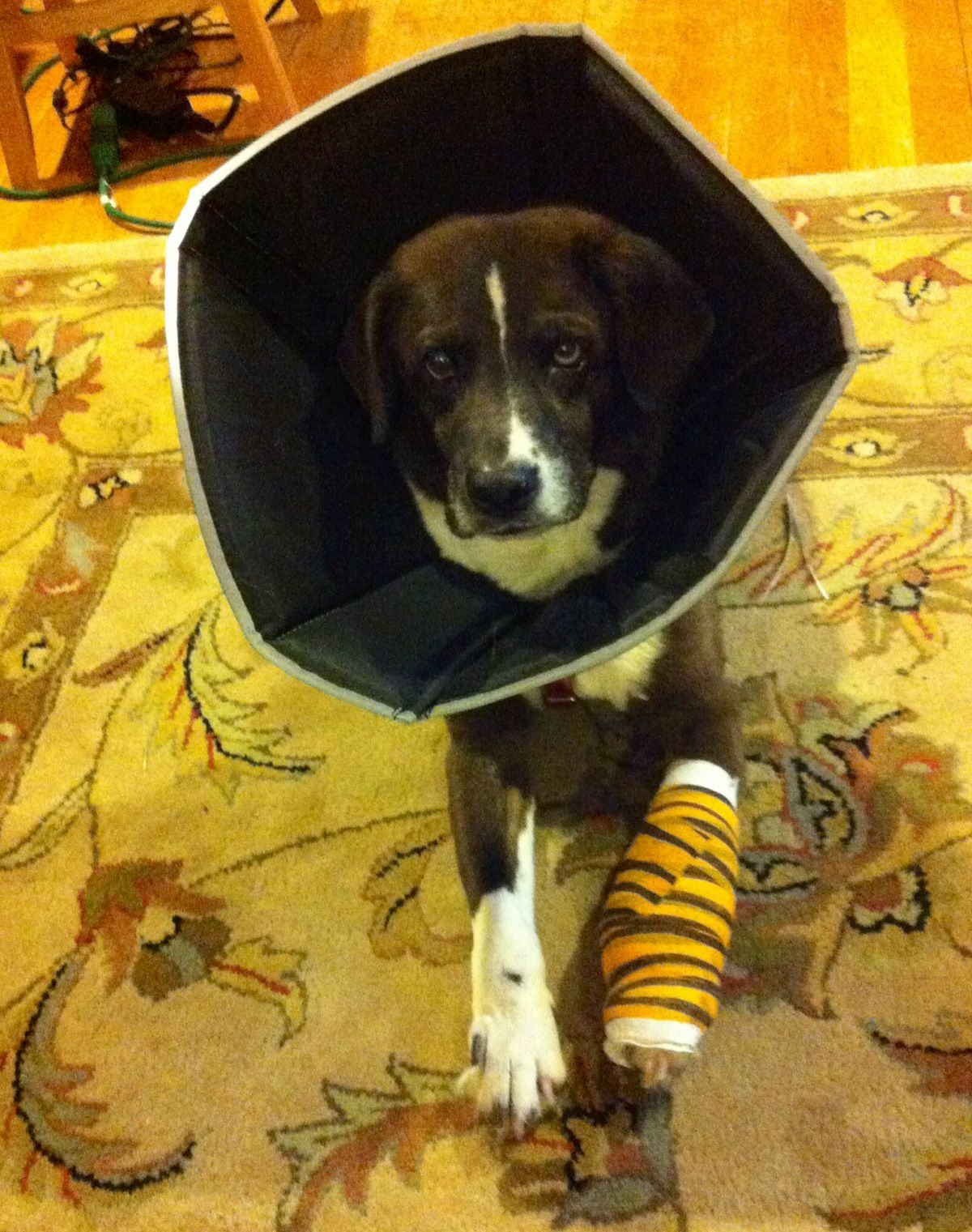 Still cute, even in a cone.