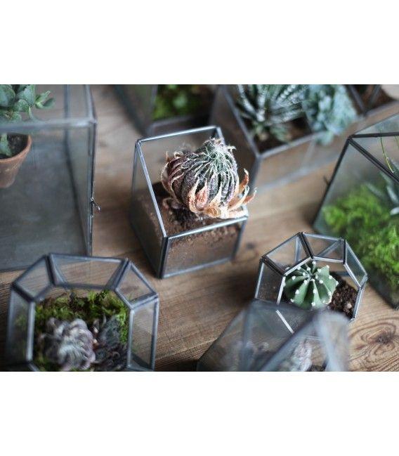KORRA Terrarium design et éthique : http://www.nopalea.fr/decoration/85-korra-terrarium.html