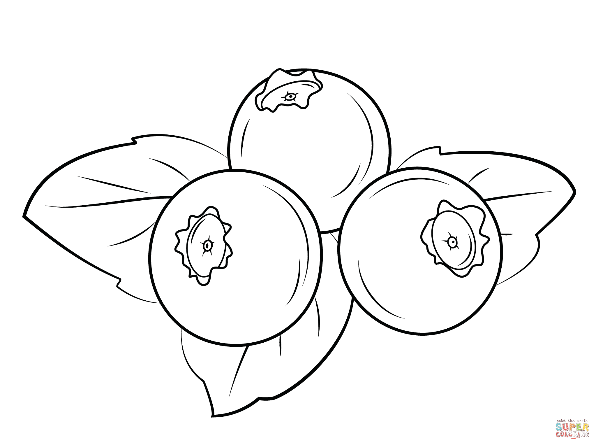 Line Drawing In C : Blueberries super coloring drawing flowers tutorials
